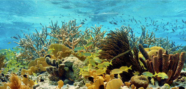 Фотообои в ванную кораллы море фото (underwater-world-00142)