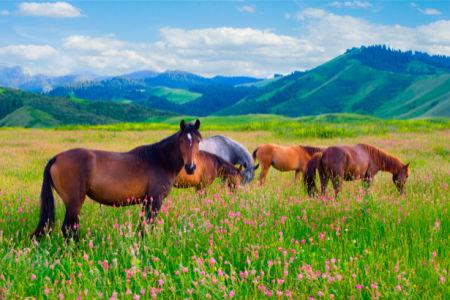 Фотообои с природой табун лошадей (animals-0000112)