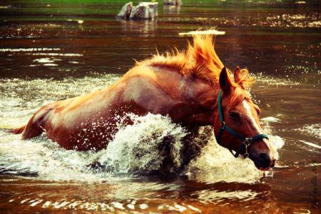 Фотообои лошадь в воде (animals-0000121)