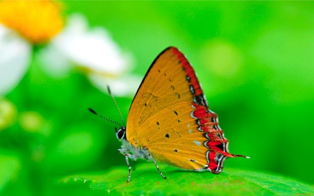Фотообои с природой бабочка (animals-0000127)