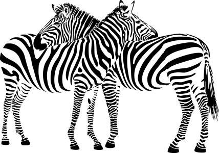 Фотообои Любовь зебры (animals-511)