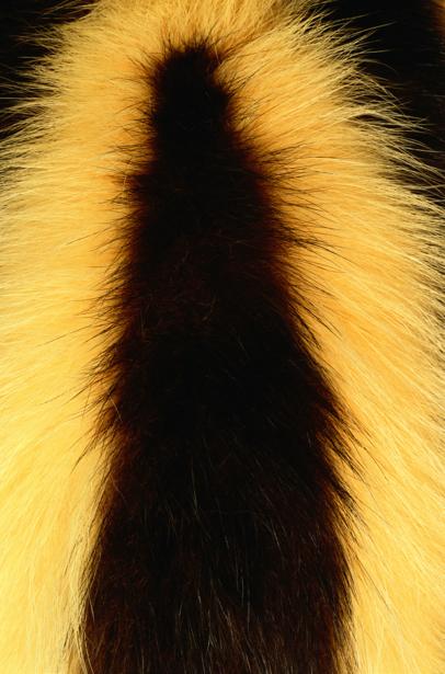 Фотообои черное и желтое текстура мех (background-0000309)