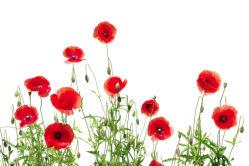 flowers-0000155