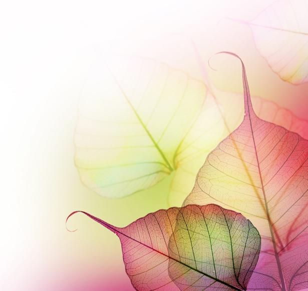 Фотообои на стену -  Цветные листочки (flowers-0000174)