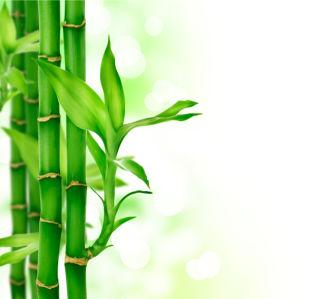 Фото обои на стену - Бамбук (flowers-0000252)