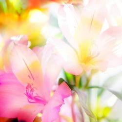 flowers-0000330
