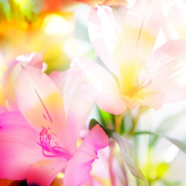 Обои фото Фоновый букет цветов (flowers-0000330)