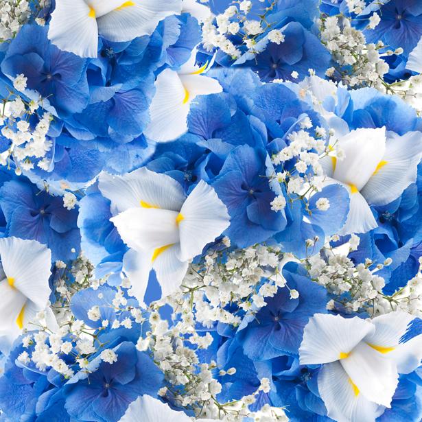 Цветочные фото обои Ирисы (flowers-0000440)