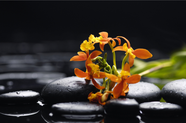 Цветок обои орхидея, камешки (flowers-0000549)