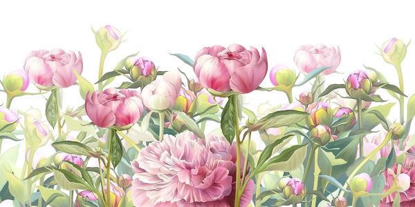 Фотообои Пионы садовые (flowers-819)