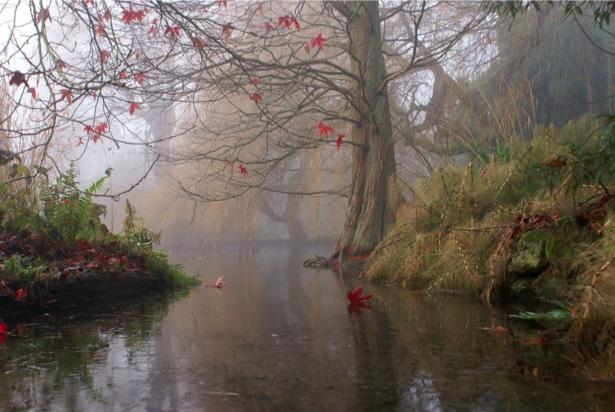 Фотообои виды природы туман на реке (nature-00063)