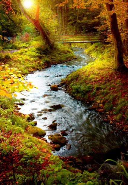 Фотообои с природой горная река в лесу (nature-00121)
