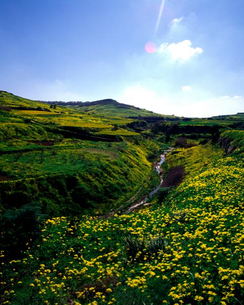 Фотообои вид на горы в цветах (nature-00220)