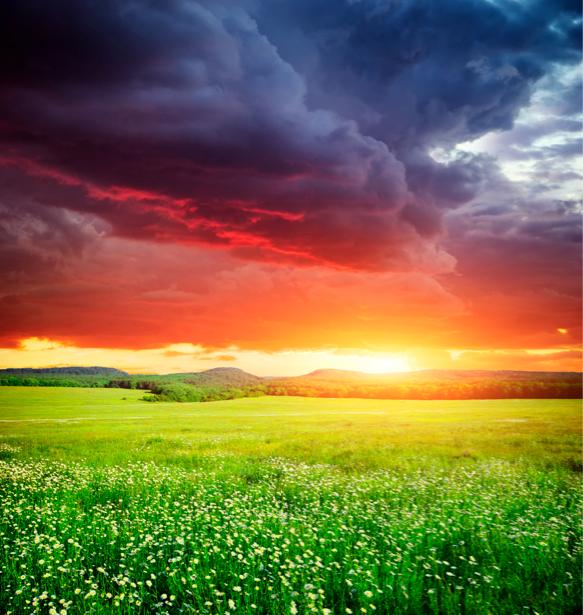 Фотообои поле пейзаж на закате (nature-00338)