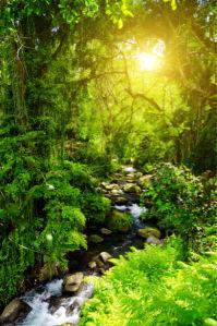Фотообои лес река папоротник (nature-00508)