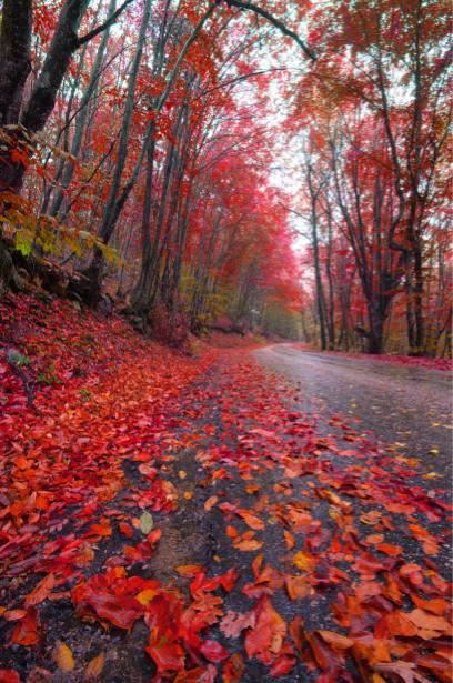 Фотообои листопад дорога, лес (nature-00538)