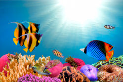 underwater-world-00004