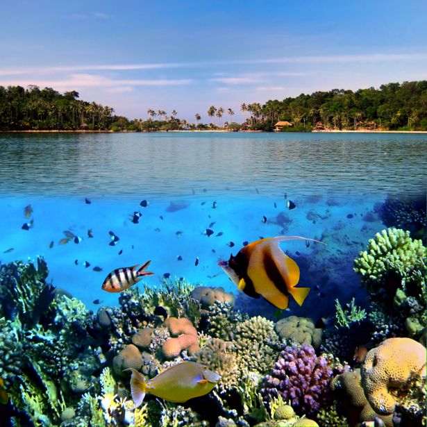Фотообои 3д море под водой риф (underwater-world-00043)