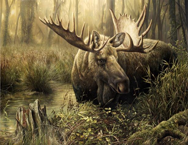 Фотообои лось в лесу дремучем (animals-0000119)