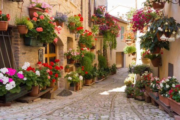 Фотообои цветы на старой улице (city1235)