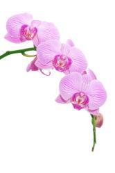 flowers-0000041