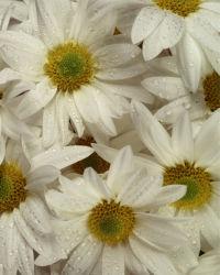flowers-0000143