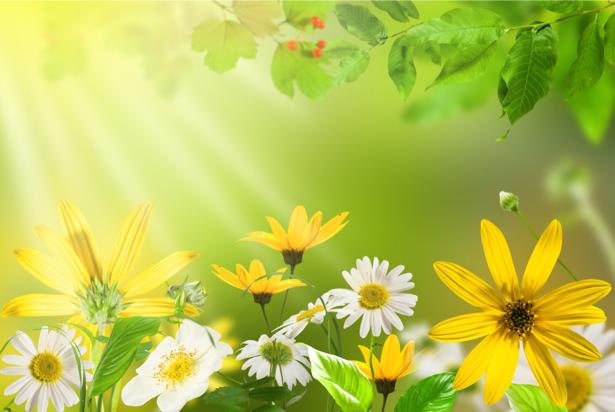Полевые цветы цветочные обои (flowers-0000434)
