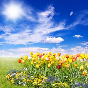 Фото обои для стен цветы на клумбе (flowers-0000507)