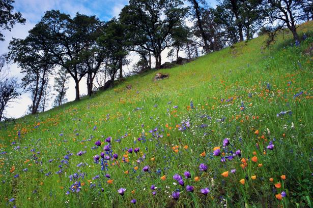Фотообои гора поле полевые цветы (nature-00233)