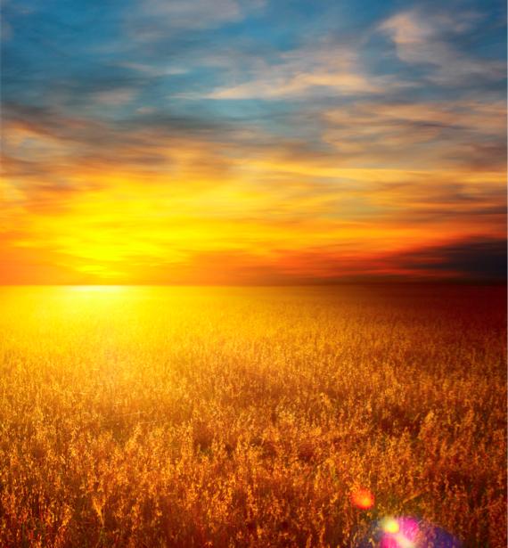 Фотообои поле пшеницы на закате (nature-00439)