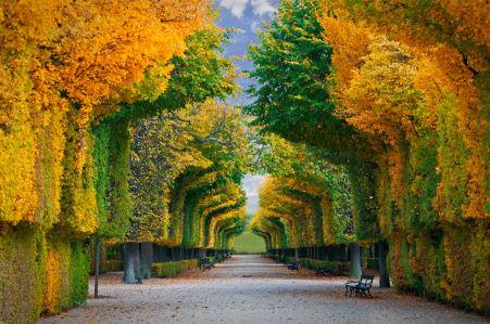 Фотообои деревья в осеннем парке (sp3)