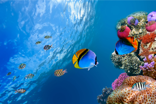 Фотообои подводная природа кораллы (underwater-world-00047)