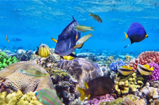 Подводный мир, кораллы - фотообои (underwater-world-00150)
