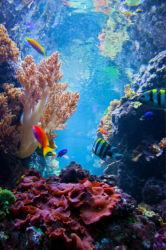 underwater-world-00192