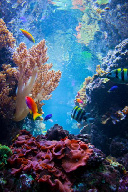 Фотообои в ванную коралл розовый (underwater-world-00192)