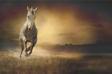 Фотообои лошади в аллюре (animals-0000284)