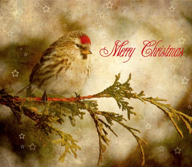 Фотообои зимняя птица (animals-0000318)