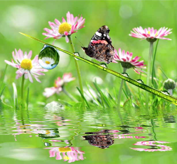 Фотообои бабочка, капли, роса (animals-0000338)