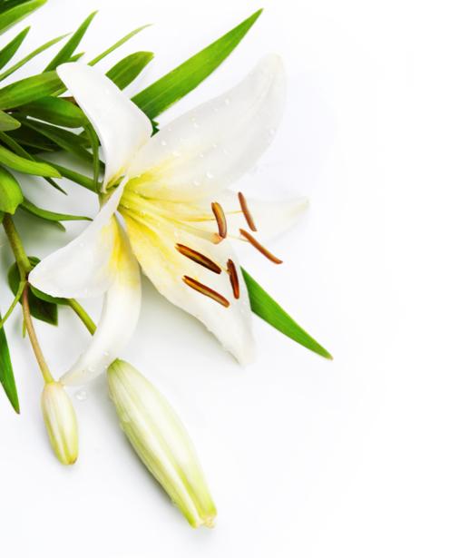 Белые лилии цветы для спальни фото (flowers-0000107)