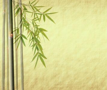Фото обои на стену Бамбук (flowers-0000211)