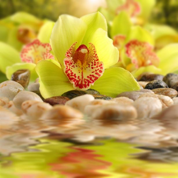 Цветок фото обои желтые орхидеи (flowers-0000558)