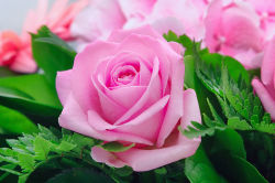 flowers-763