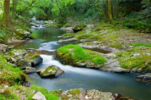 Фотообои горная река в лесу (nature-0000684)