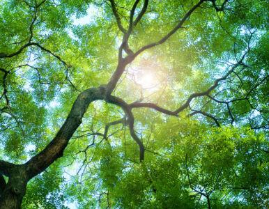 Фотообои зеленый лес (nature-0000811)