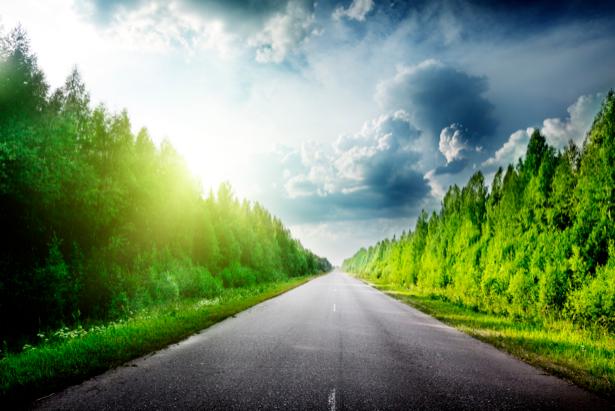 Фотообои дорога лес фото (nature-00316)