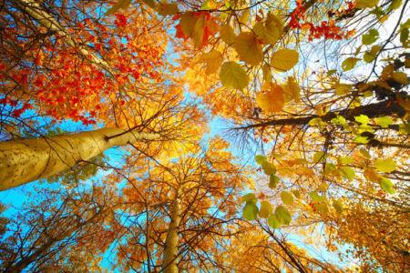Фотообои фото осенний лес (nature-00523)