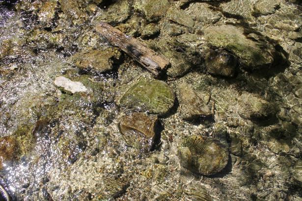 Фотообои в ванную дно горной реки (underwater-world-00119)