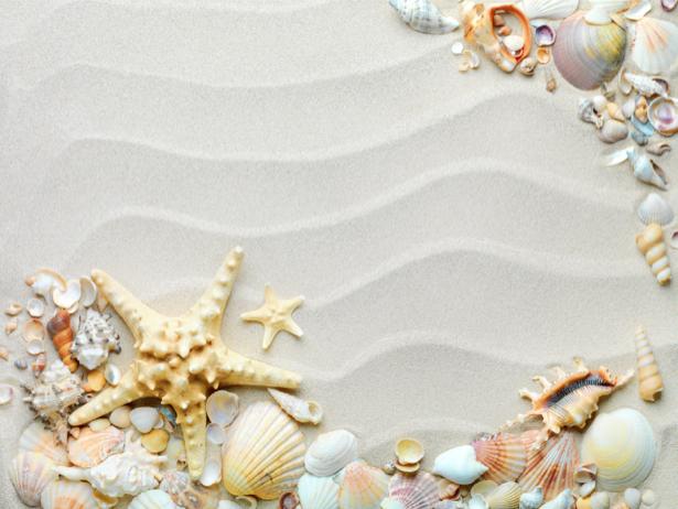 Фотообои в ванную ракушки на белом (underwater-world-00129)
