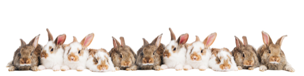 Фотообои кролики в ряд (animals-0000229)