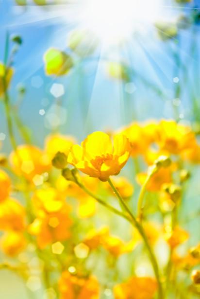 Желтые цветы фотообои цветов на стену (flowers-0000225)